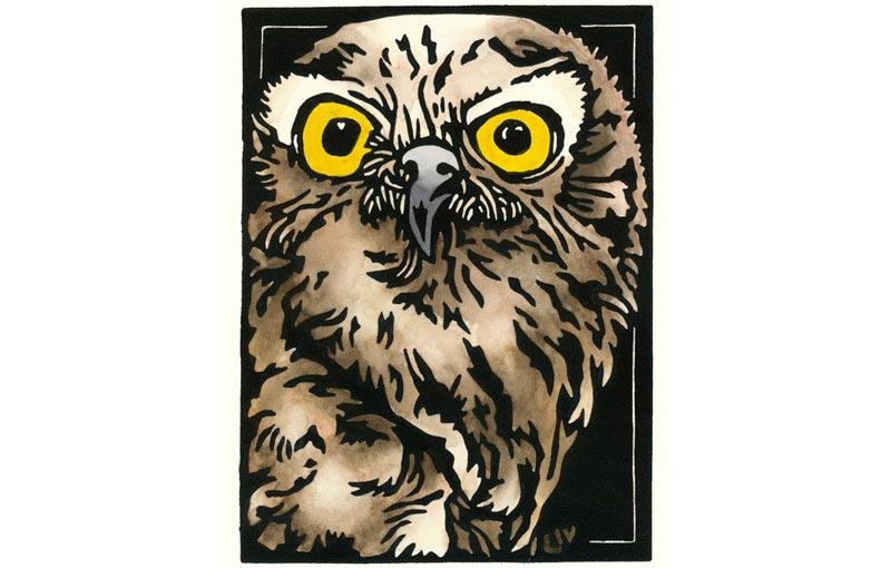 Barking Owl Snapshot