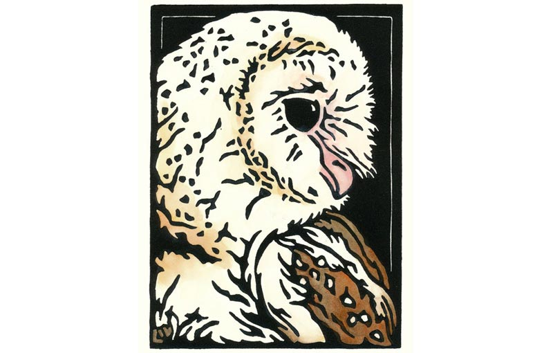 Barn Owl Snapshot