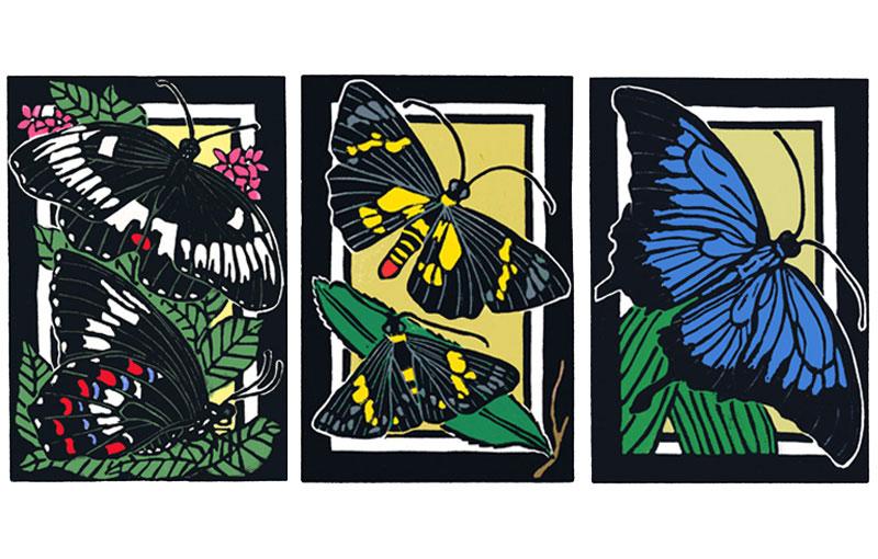 Butterflies – Orchard – Southern Regent Skipper – Ulysses