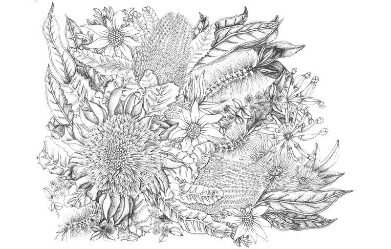 Wildflowers Biro Drawing