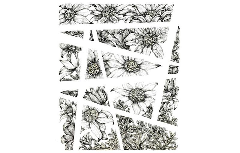 Flannel Flower Excerpt Pen & Ink