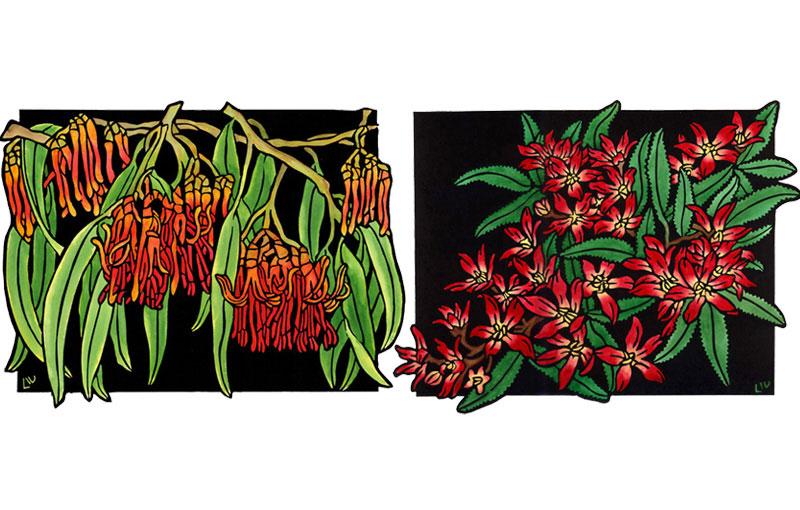 Native Mistletoe & Christmas Bush Design