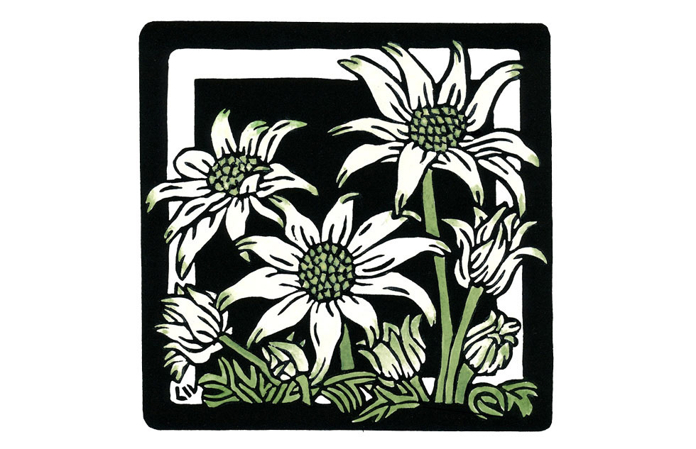 Flannel Flower Square