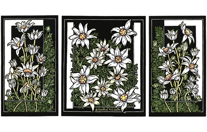 Flannel Flower Tryptich