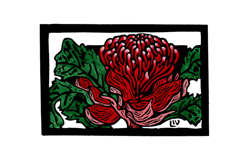 Australian Floral Emblem – New South Wales