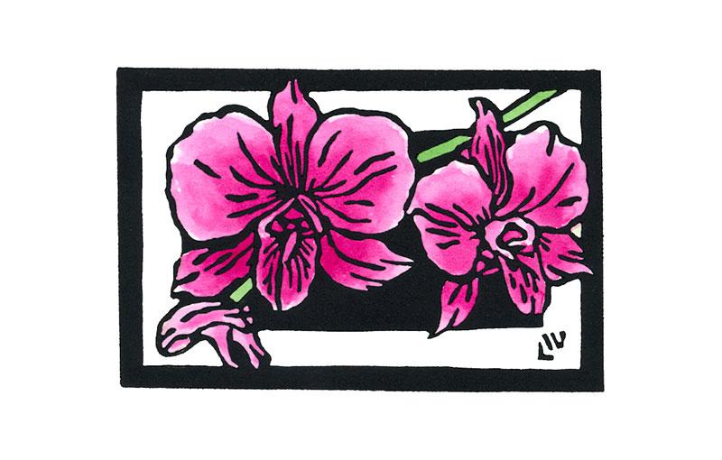 Australian Floral Emblem – Queensland