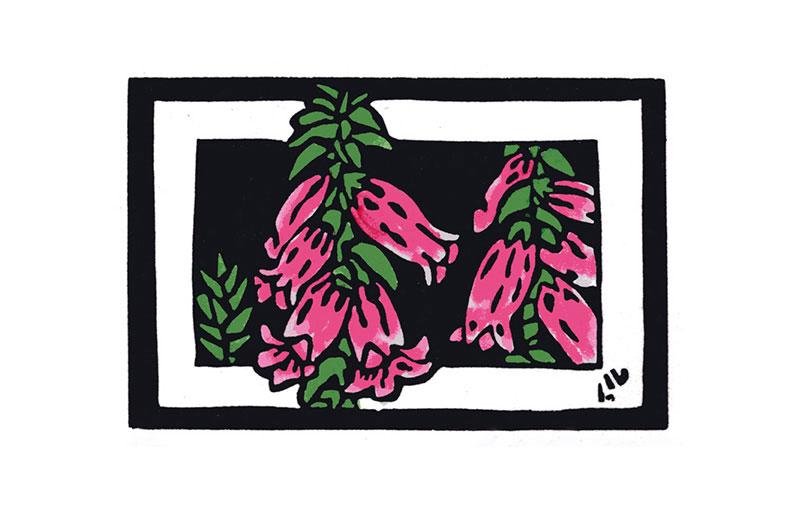 Australian Floral Emblem – Victoria