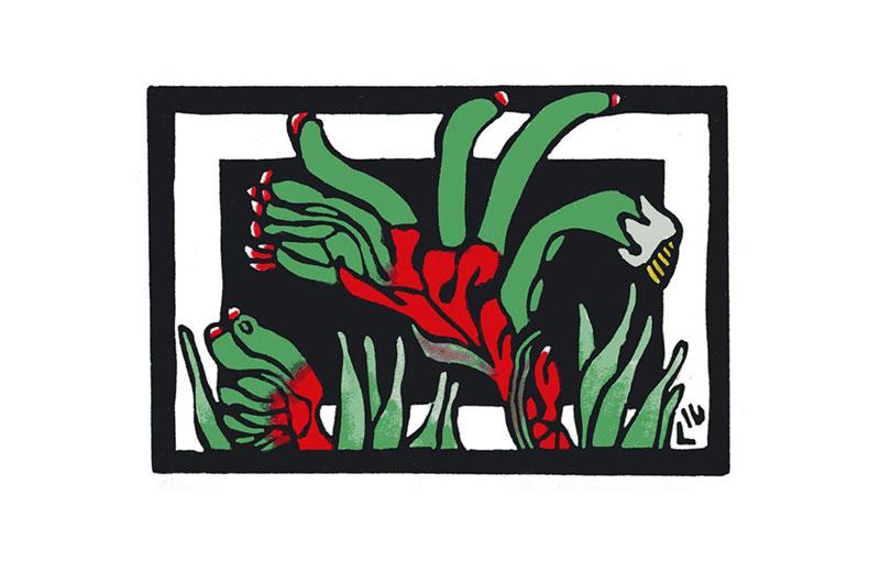 Australian Floral Emblem – Western Australia