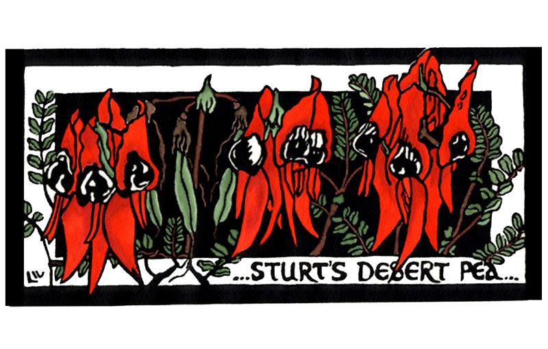 Sturt Desert Pea – South Australia State Floral Emblem