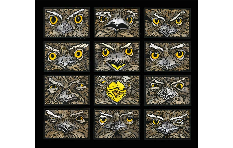 Tawny Frogmouth Expressions