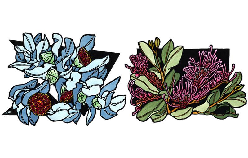 'Mottlecah' & Goods Grevillea Trios