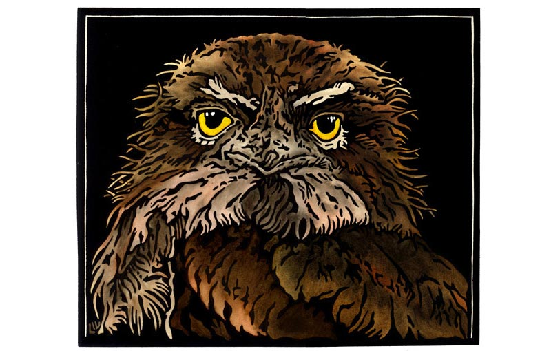 Tawny Frogmouth Stare